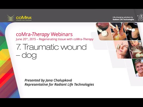 Traumatic wound – dog